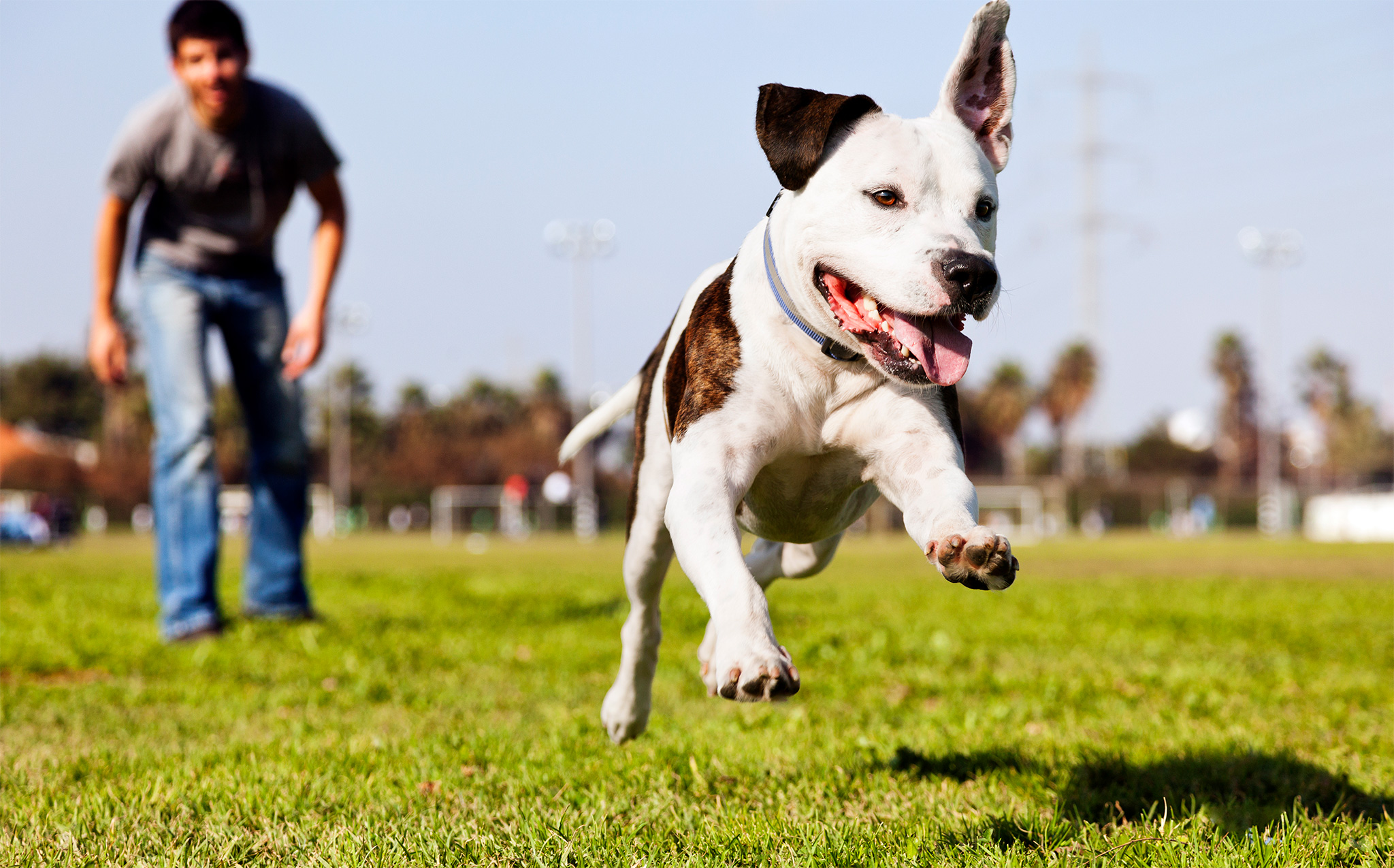 3 Rules for Going Off Leash